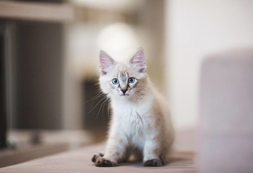 Guide besoin du chat